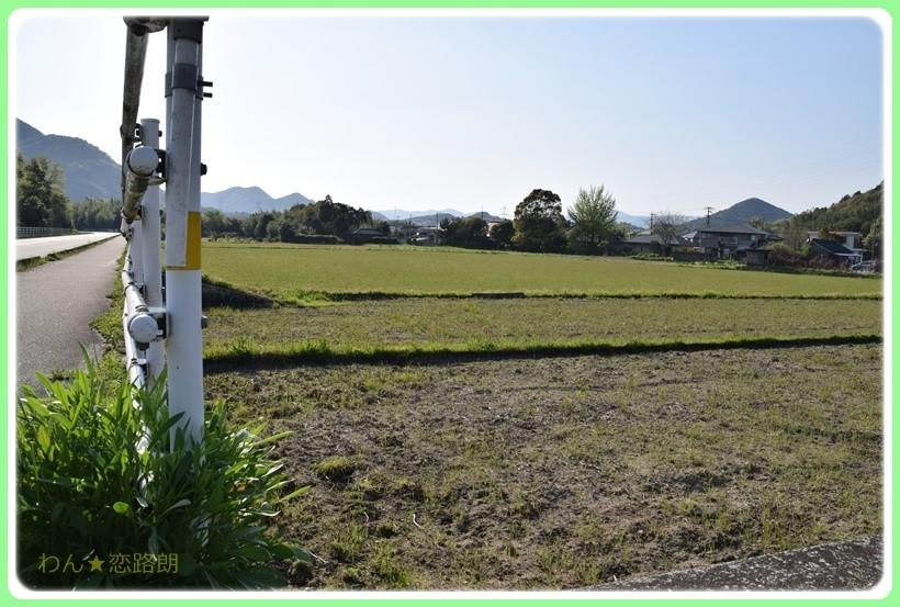 f:id:yasukazu01:20170513204224j:plain