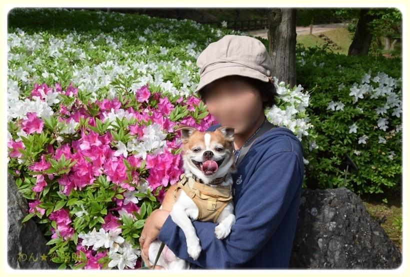 f:id:yasukazu01:20170518144152j:plain