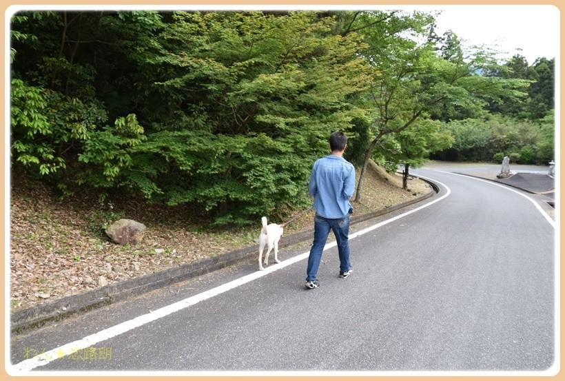 f:id:yasukazu01:20170528225718j:plain