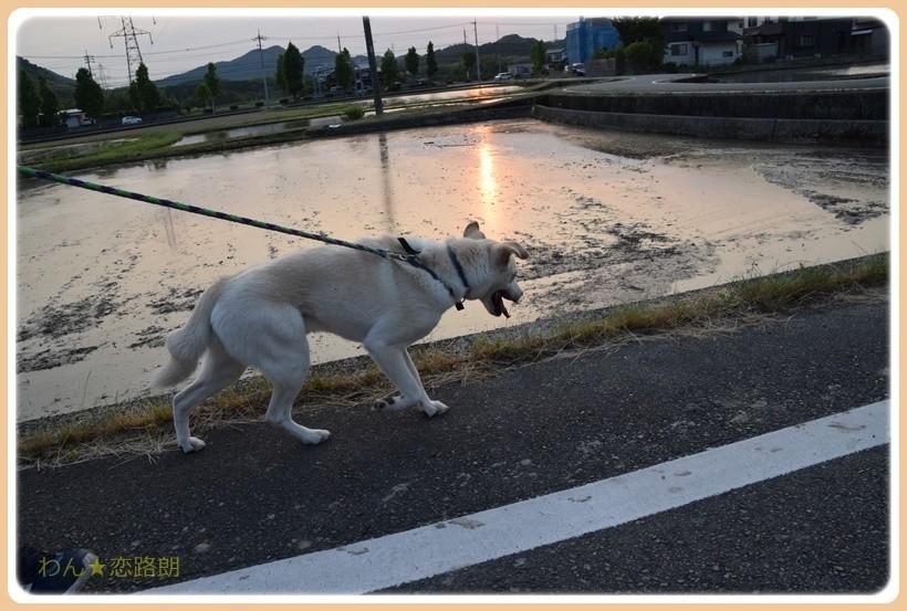 f:id:yasukazu01:20170603172741j:plain