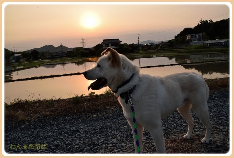 f:id:yasukazu01:20170603181253j:plain