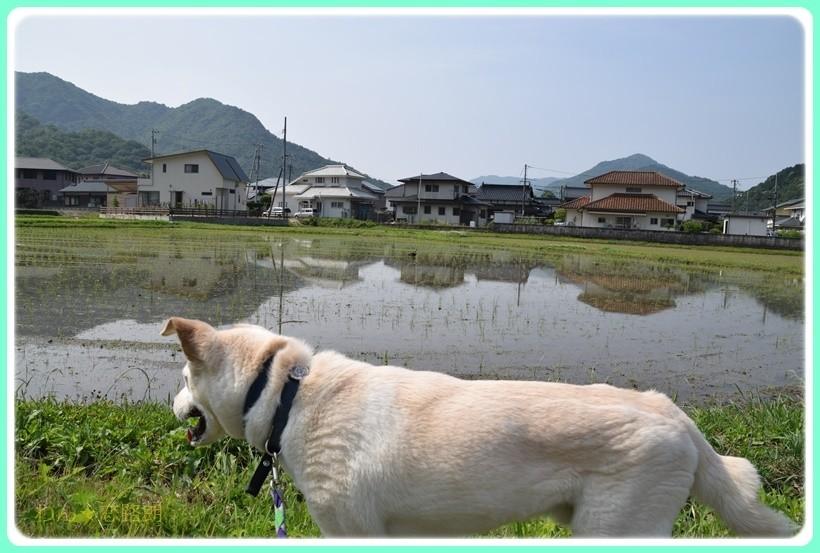 f:id:yasukazu01:20170610154034j:plain