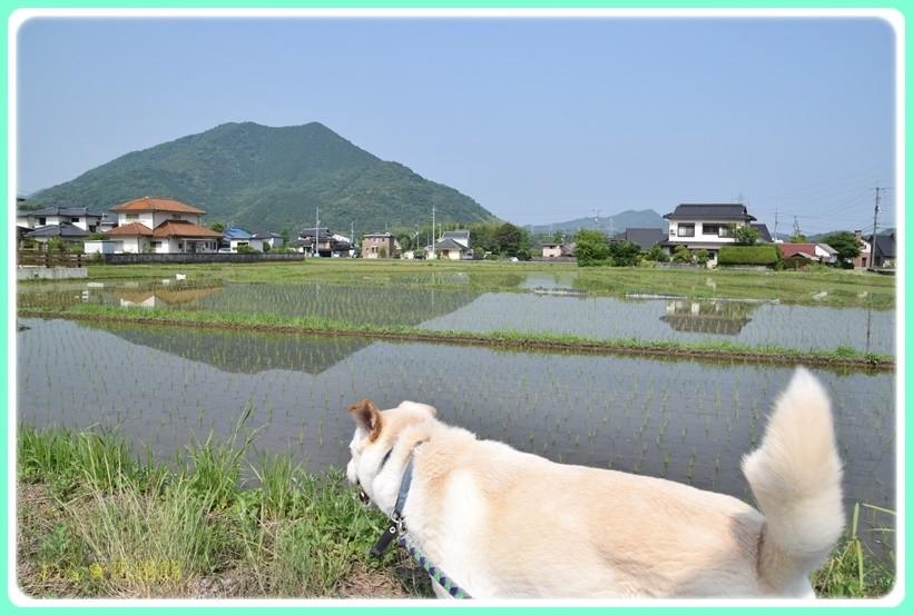 f:id:yasukazu01:20170610154210j:plain