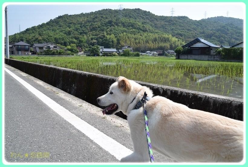 f:id:yasukazu01:20170610154354j:plain