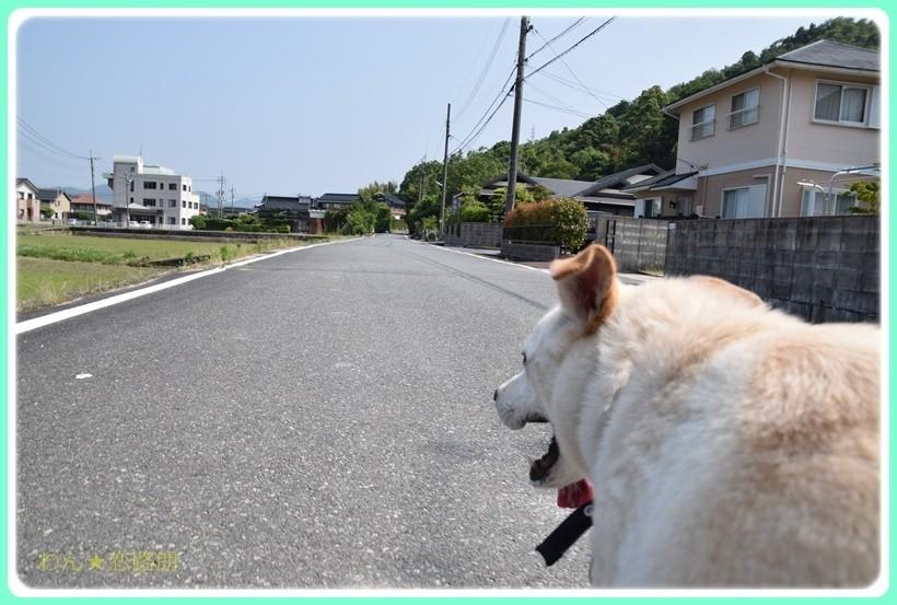 f:id:yasukazu01:20170610154504j:plain