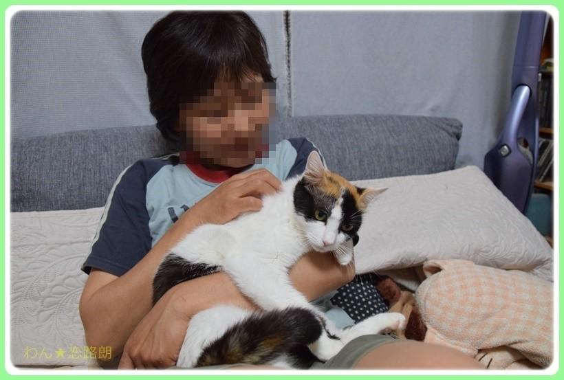 f:id:yasukazu01:20170624153523j:plain
