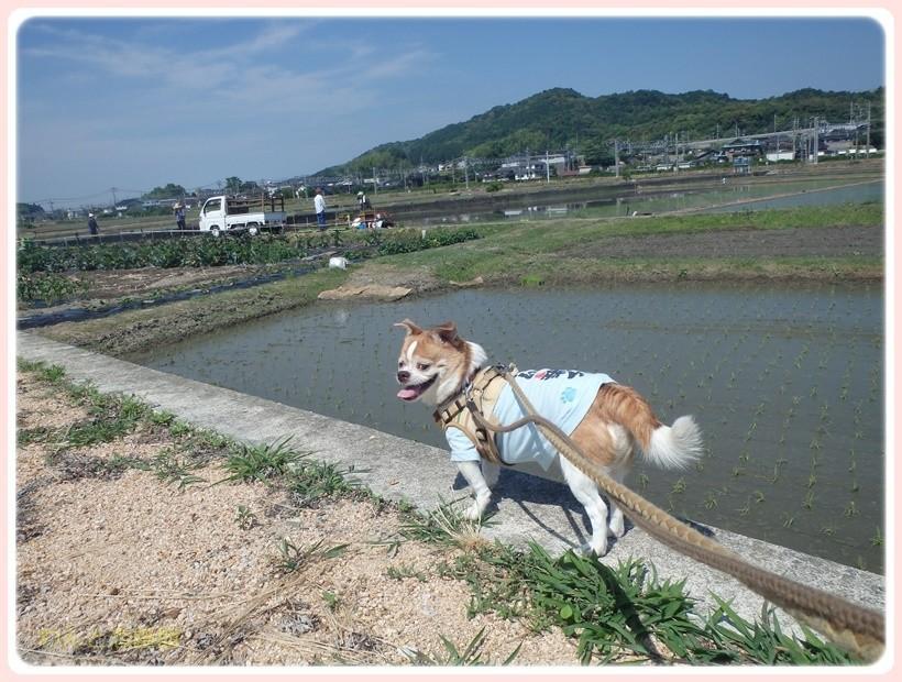 f:id:yasukazu01:20170628145132j:plain