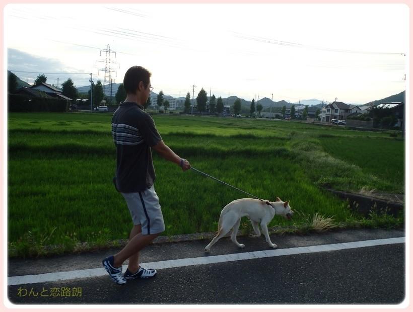 f:id:yasukazu01:20170712205511j:plain