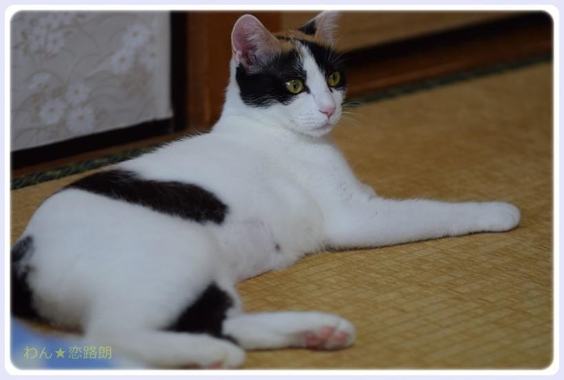 f:id:yasukazu01:20170826145931j:plain