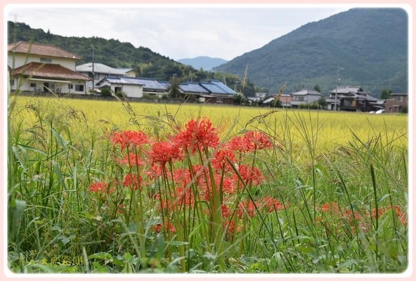 f:id:yasukazu01:20170924195651j:plain
