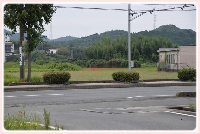 f:id:yasukazu01:20170924195803j:plain