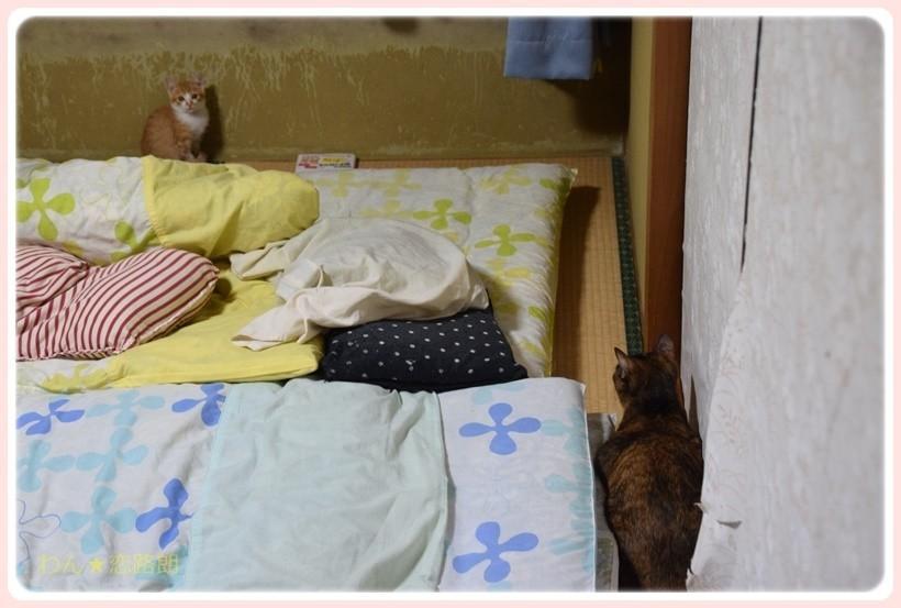 f:id:yasukazu01:20171006152856j:plain