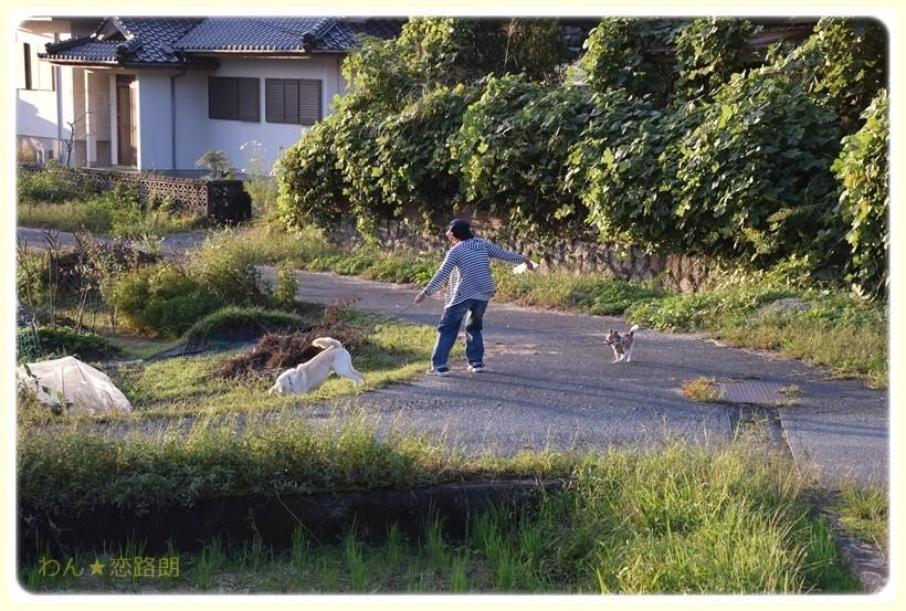 f:id:yasukazu01:20171009190122j:plain