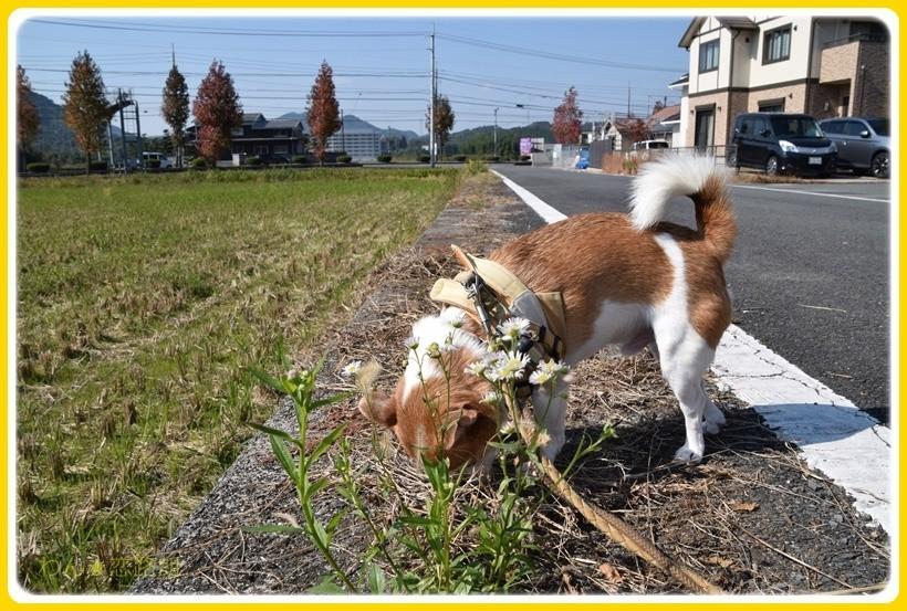f:id:yasukazu01:20171108180914j:plain