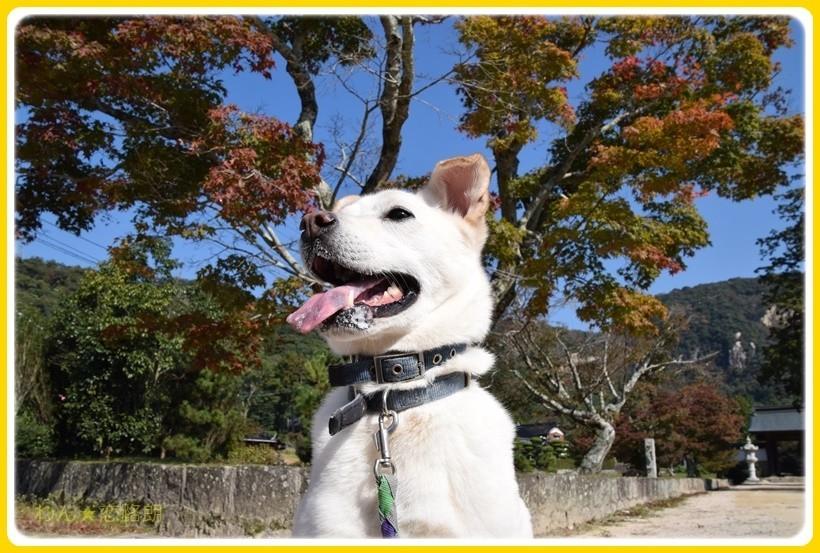 f:id:yasukazu01:20171110182442j:plain