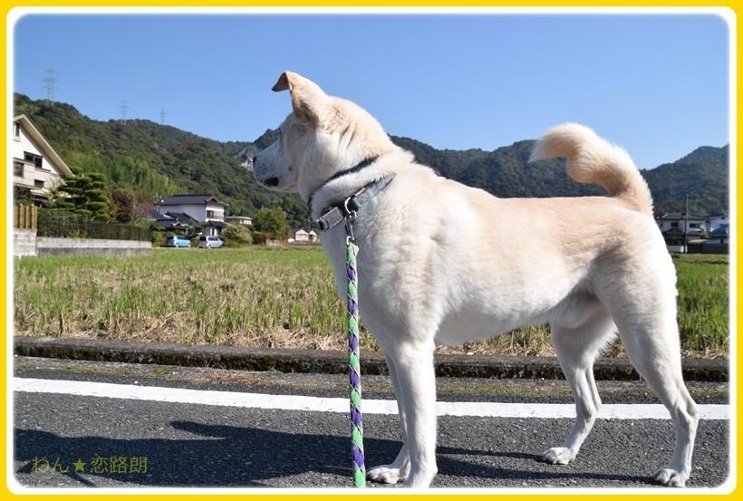 f:id:yasukazu01:20171110183259j:plain