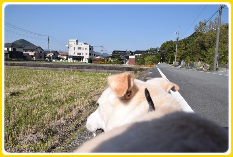 f:id:yasukazu01:20171110183340j:plain