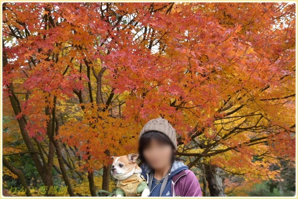 f:id:yasukazu01:20171126200405j:plain