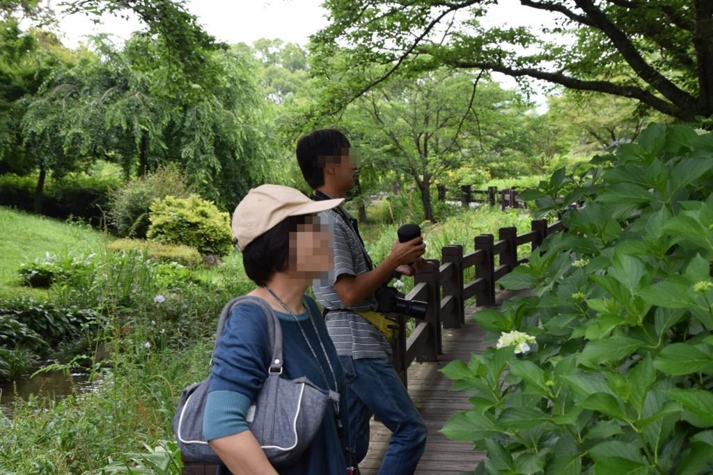 f:id:yasukazu01:20180705171840j:plain