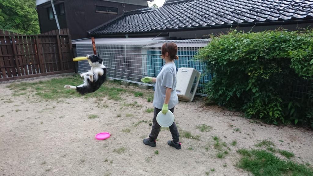 f:id:yasukazu01:20180713190208j:plain
