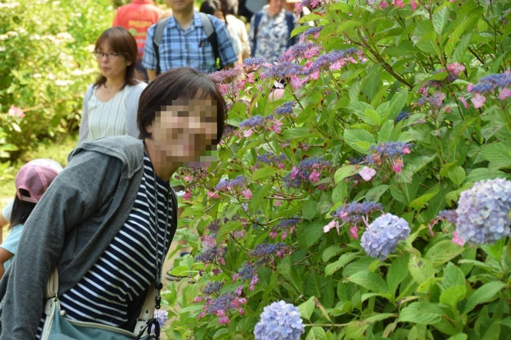 f:id:yasukazu01:20180828151459j:plain