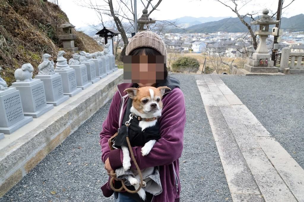 f:id:yasukazu01:20190216205236j:plain