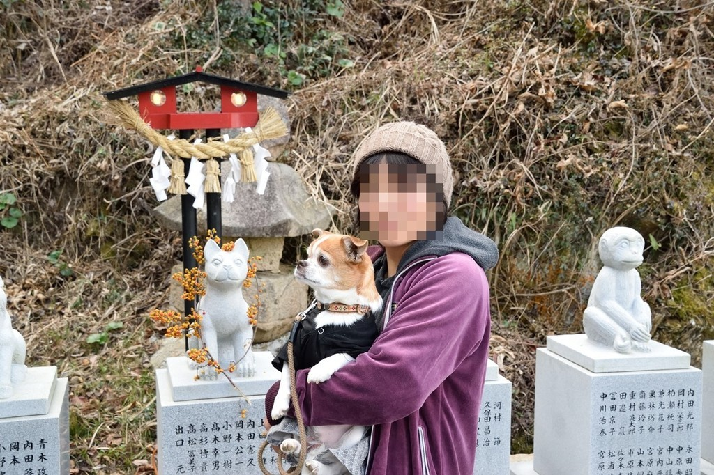 f:id:yasukazu01:20190216205327j:plain