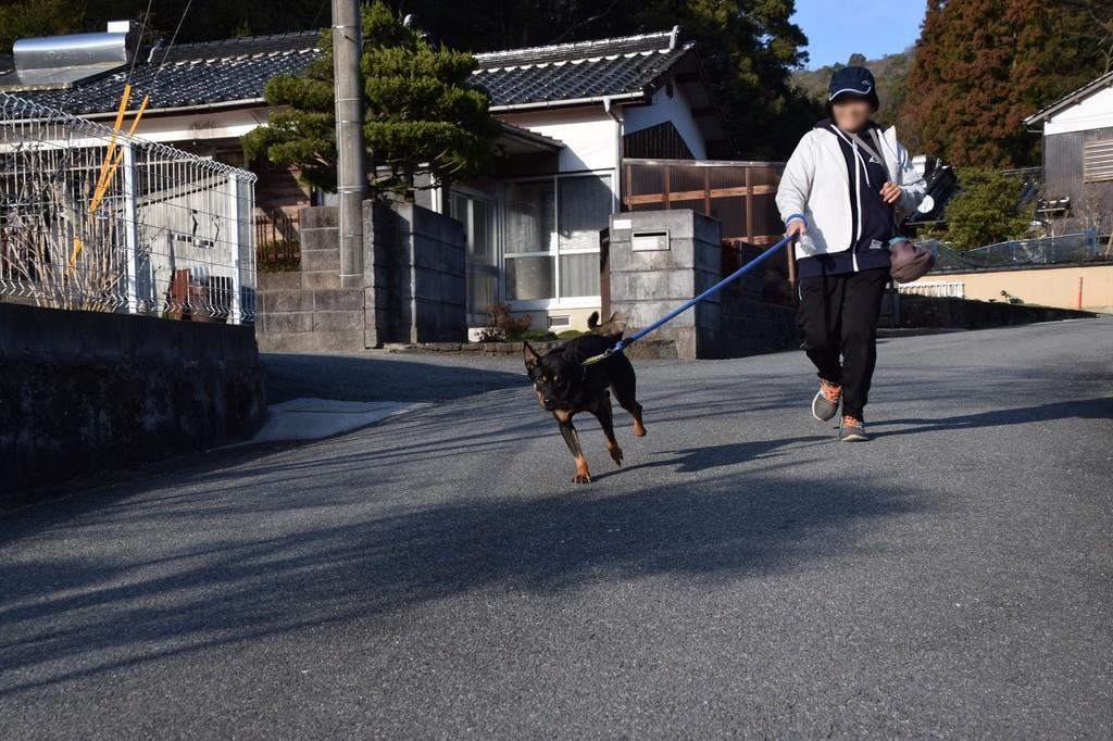 f:id:yasukazu01:20190226202435j:plain