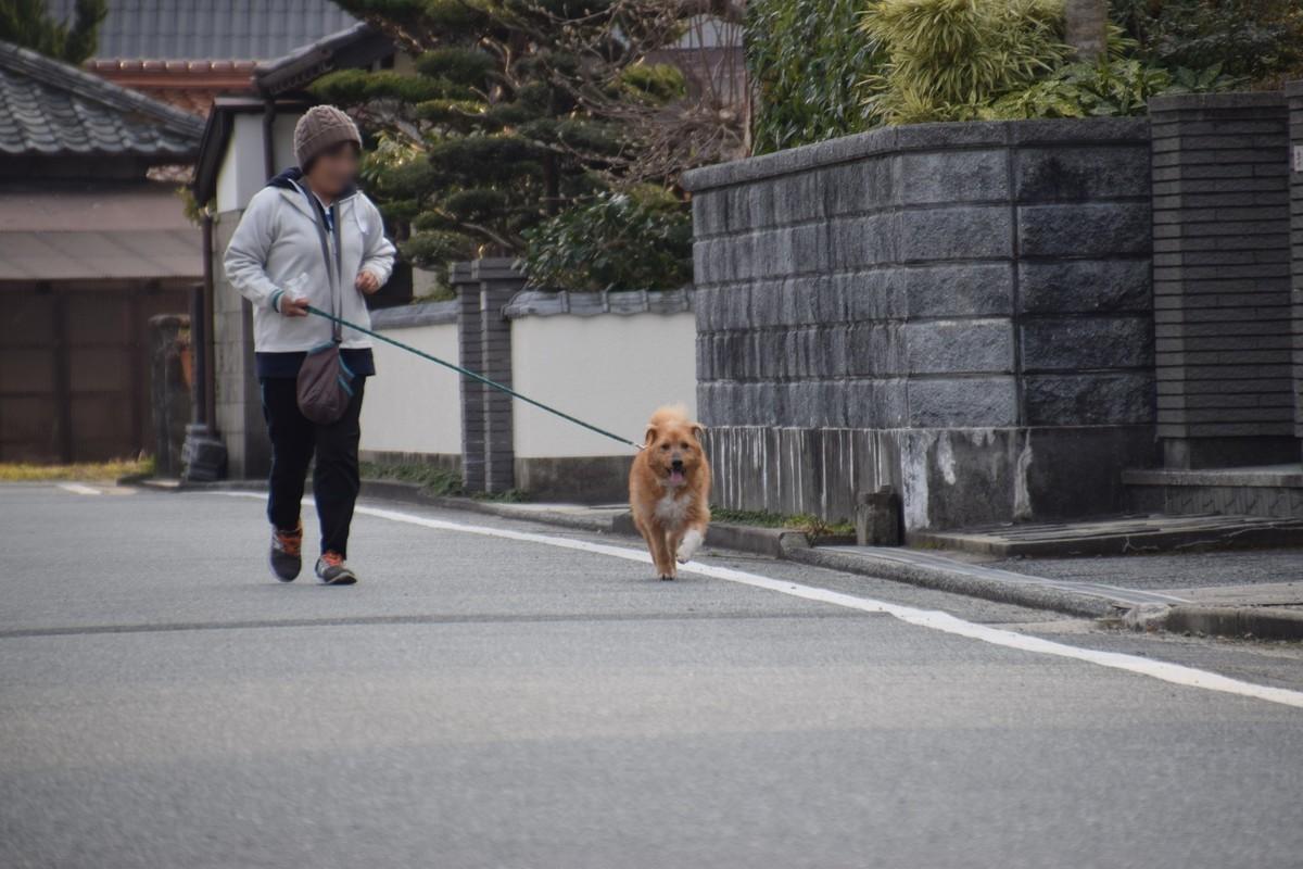 f:id:yasukazu01:20190322145434j:plain