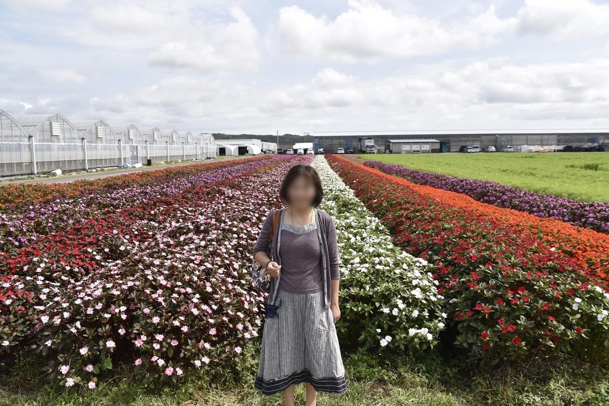 f:id:yasukazu01:20191015143751j:plain