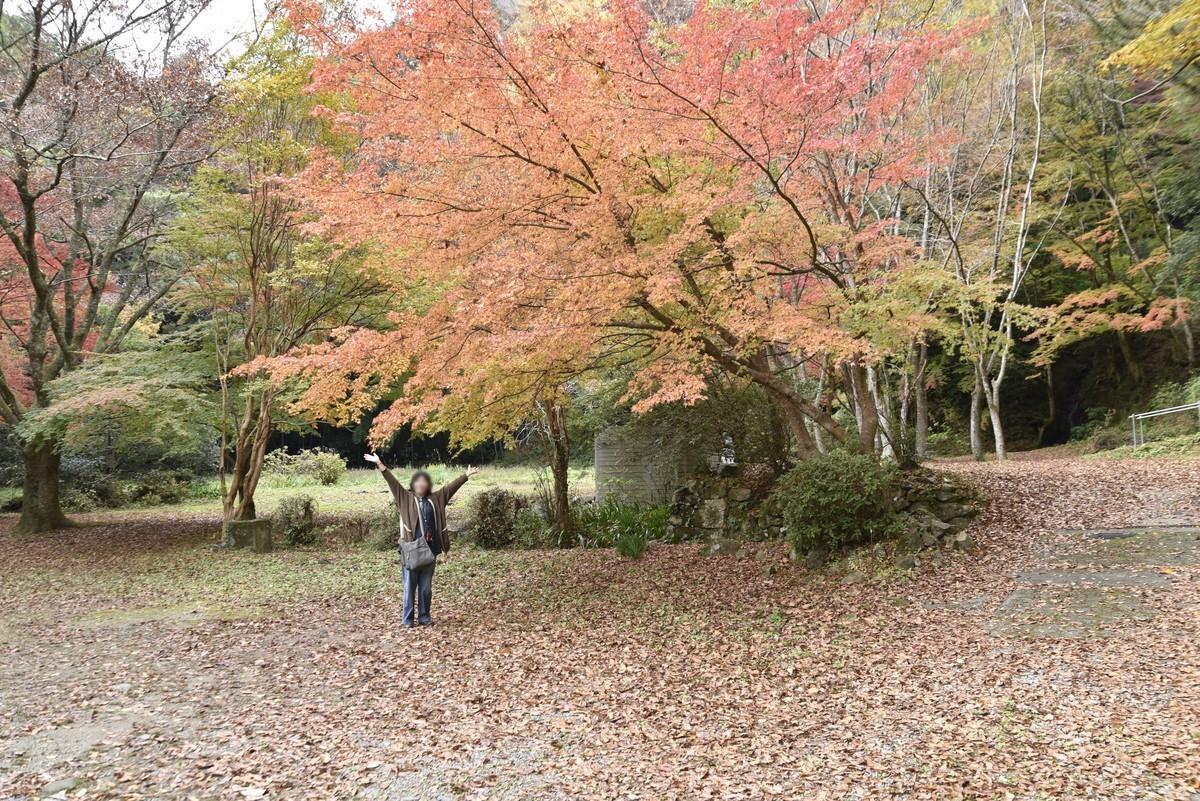 f:id:yasukazu01:20191126155016j:plain