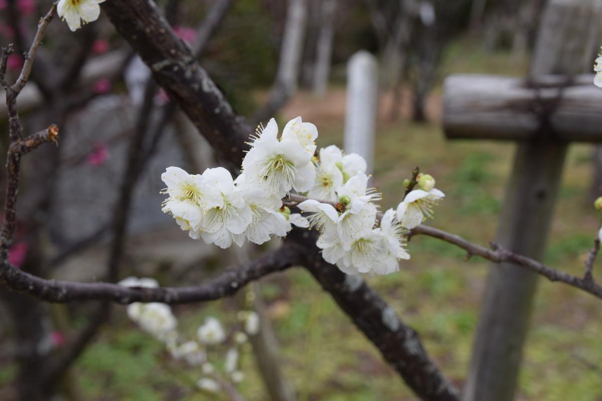 f:id:yasukazu01:20200202114318j:plain