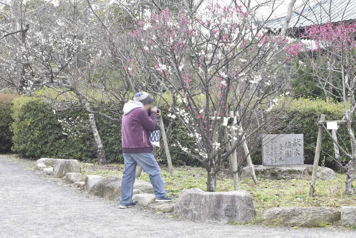f:id:yasukazu01:20200215180246j:plain
