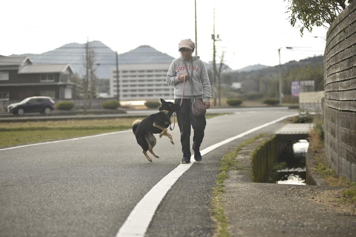 f:id:yasukazu01:20200312150844j:plain