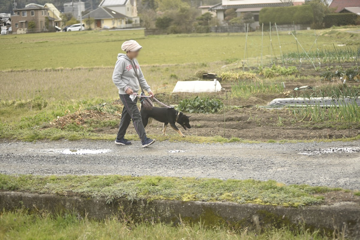f:id:yasukazu01:20200312153503j:plain