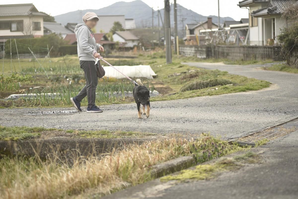 f:id:yasukazu01:20200315185843j:plain