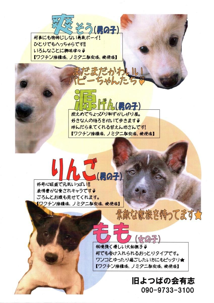 f:id:yasukazu01:20200326150245j:plain
