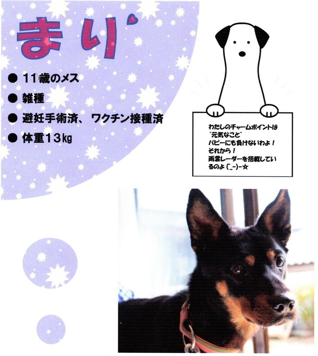 f:id:yasukazu01:20200408174106j:plain