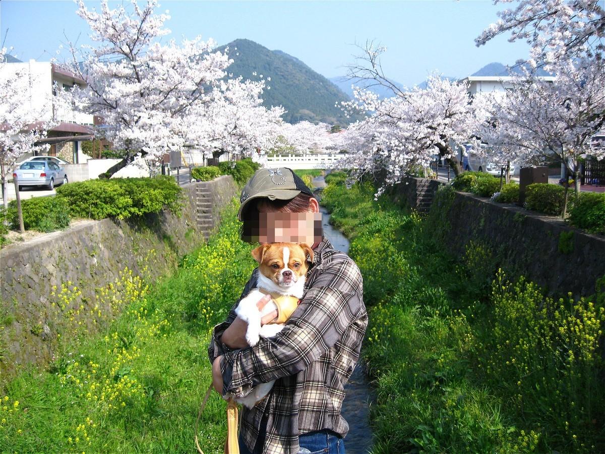 f:id:yasukazu01:20200413140031j:plain