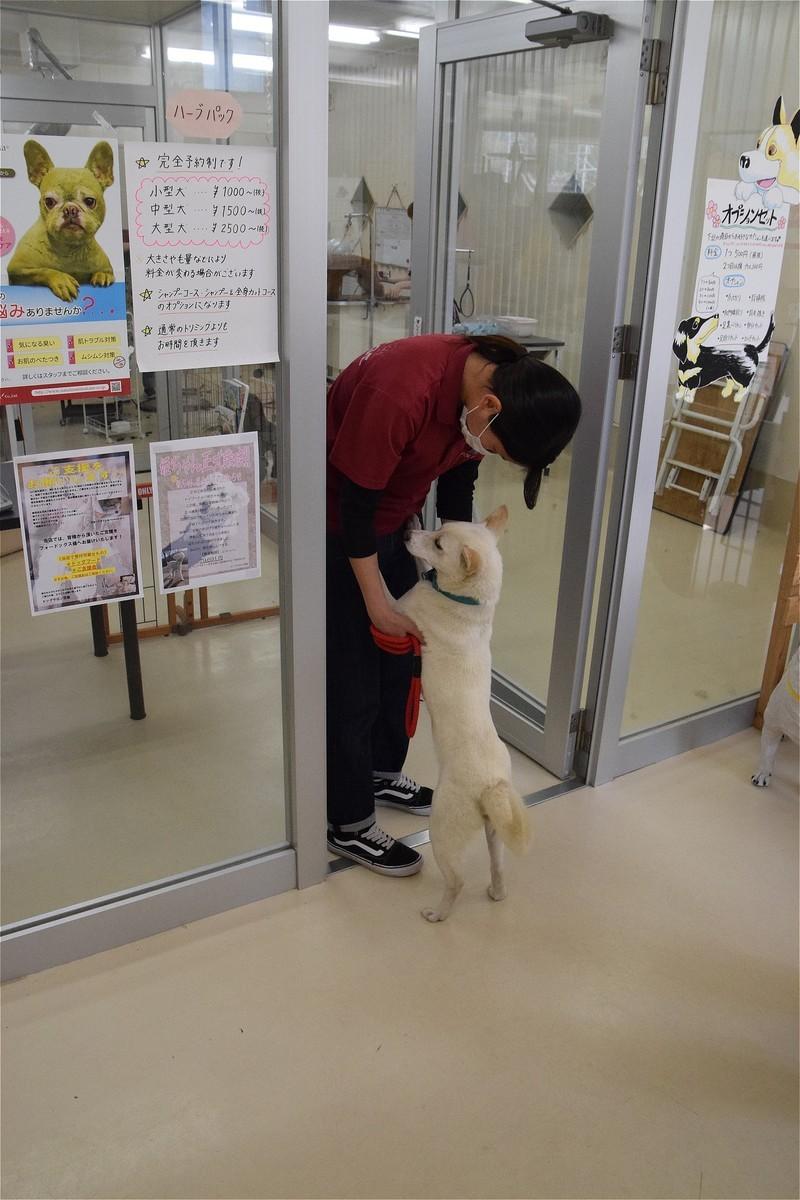 f:id:yasukazu01:20200418153144j:plain