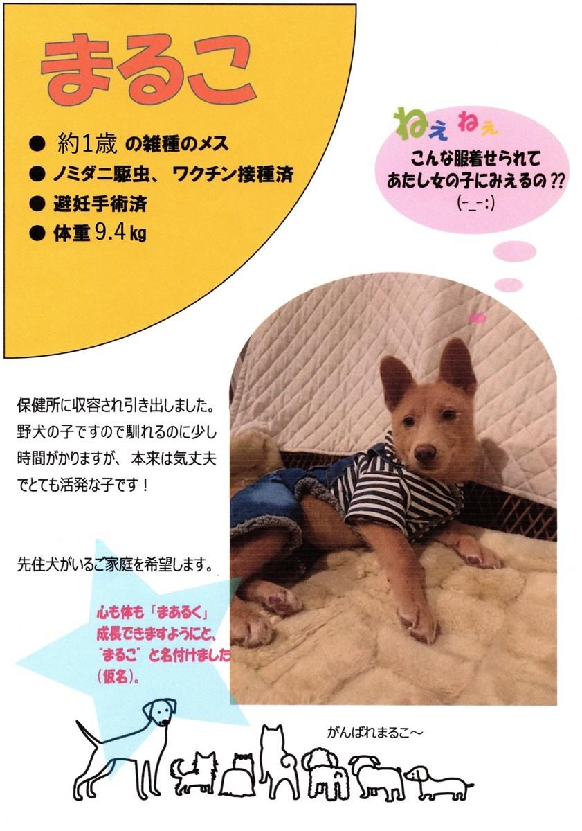 f:id:yasukazu01:20200423192752j:plain