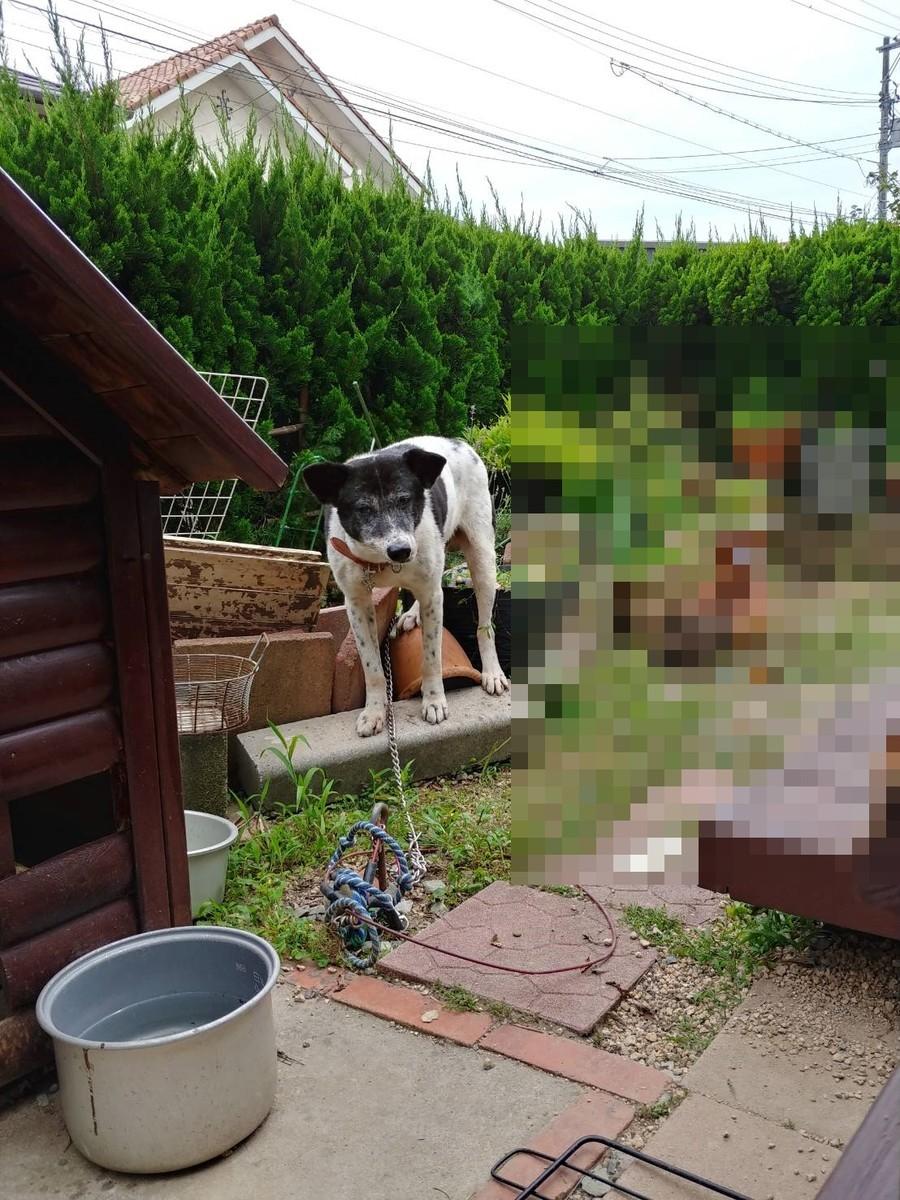 f:id:yasukazu01:20200731195355j:plain
