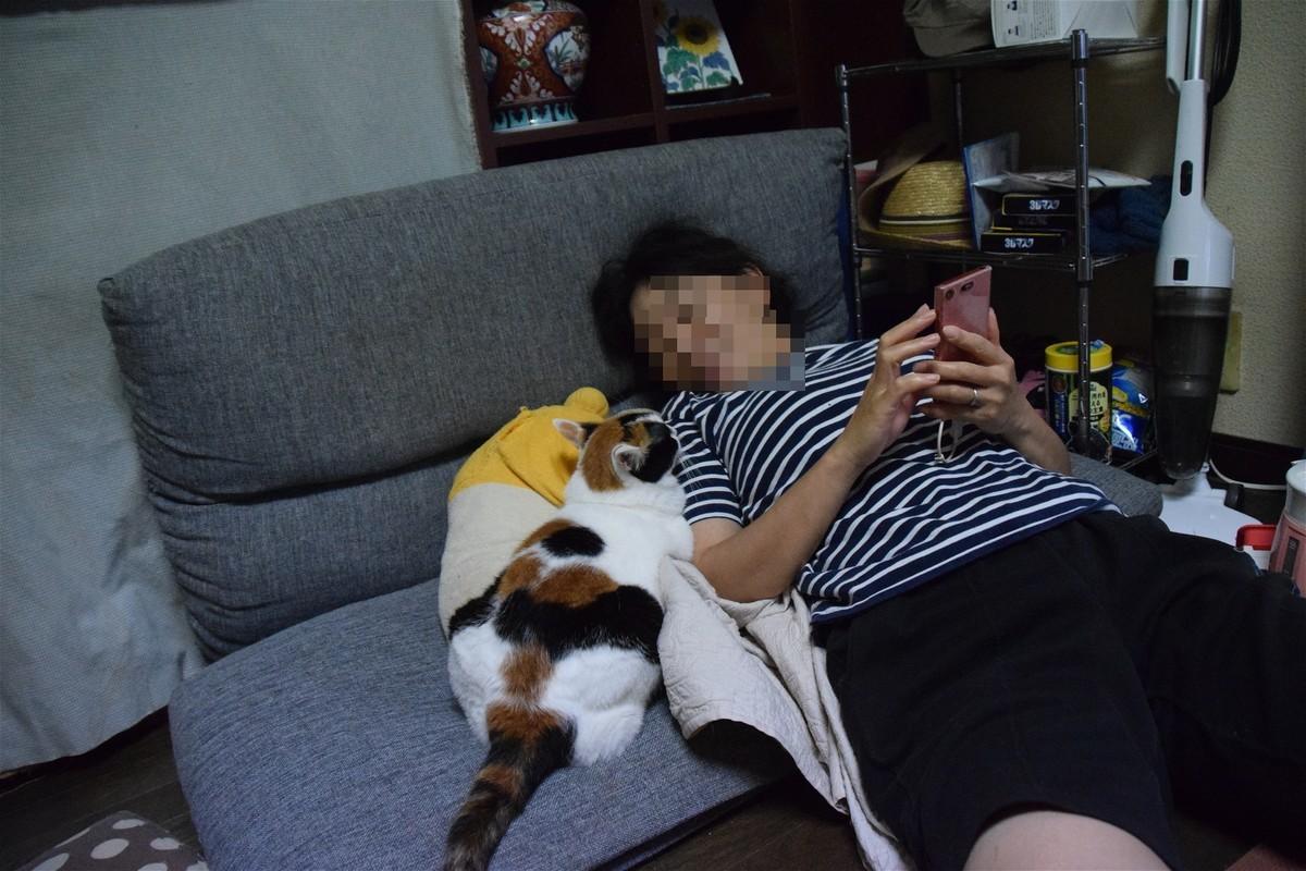 f:id:yasukazu01:20200814195316j:plain