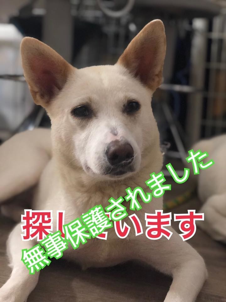 f:id:yasukazu01:20200827160913j:plain