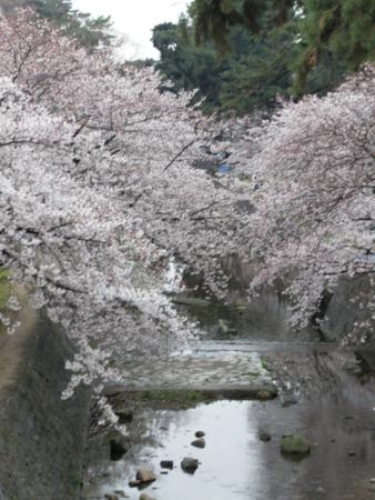 f:id:yasuko-style:20090405153609j:image