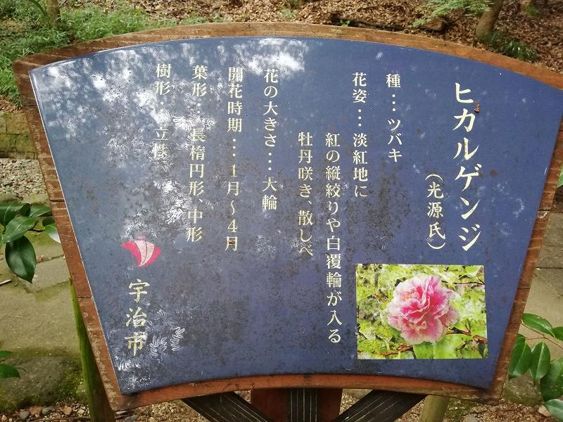 f:id:yasukochan:20200921155810j:plain