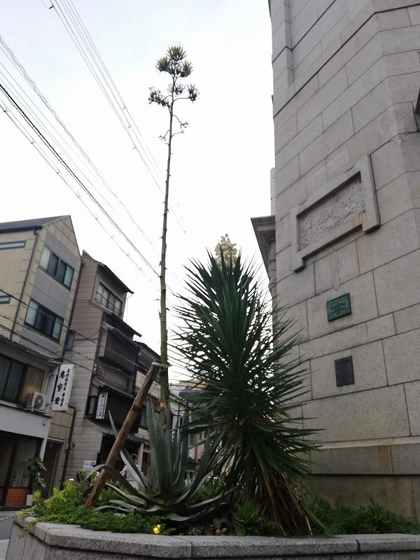 f:id:yasukochan:20210716014401j:plain