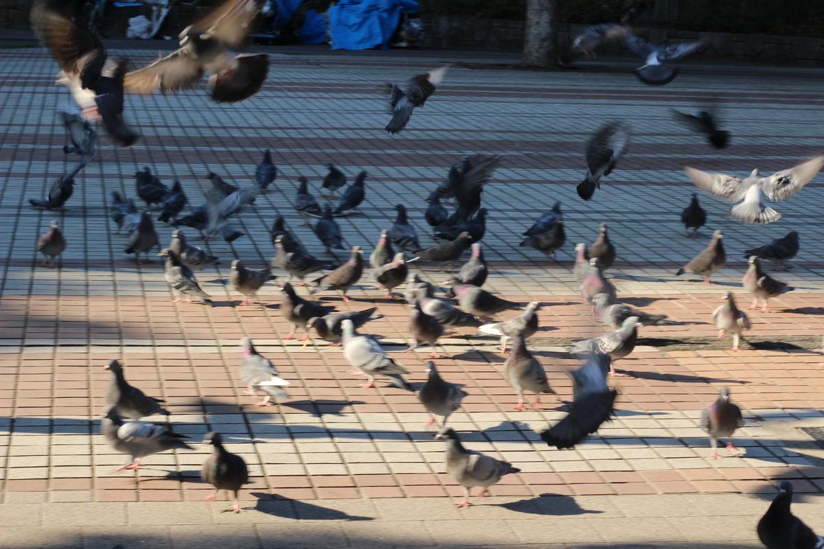 f:id:yasukosakaguchi:20200114004102j:plain