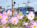 京都新聞写真コンテスト 線路際にゆれるコスモス