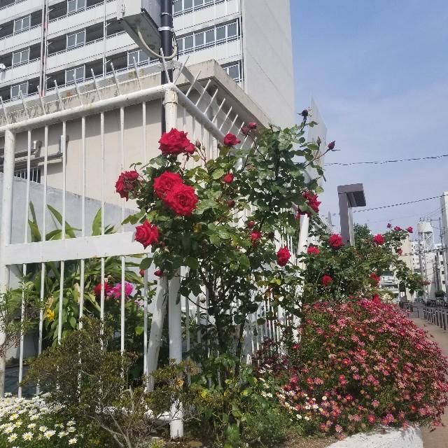 f:id:yasukuteoishii:20200512035824j:image